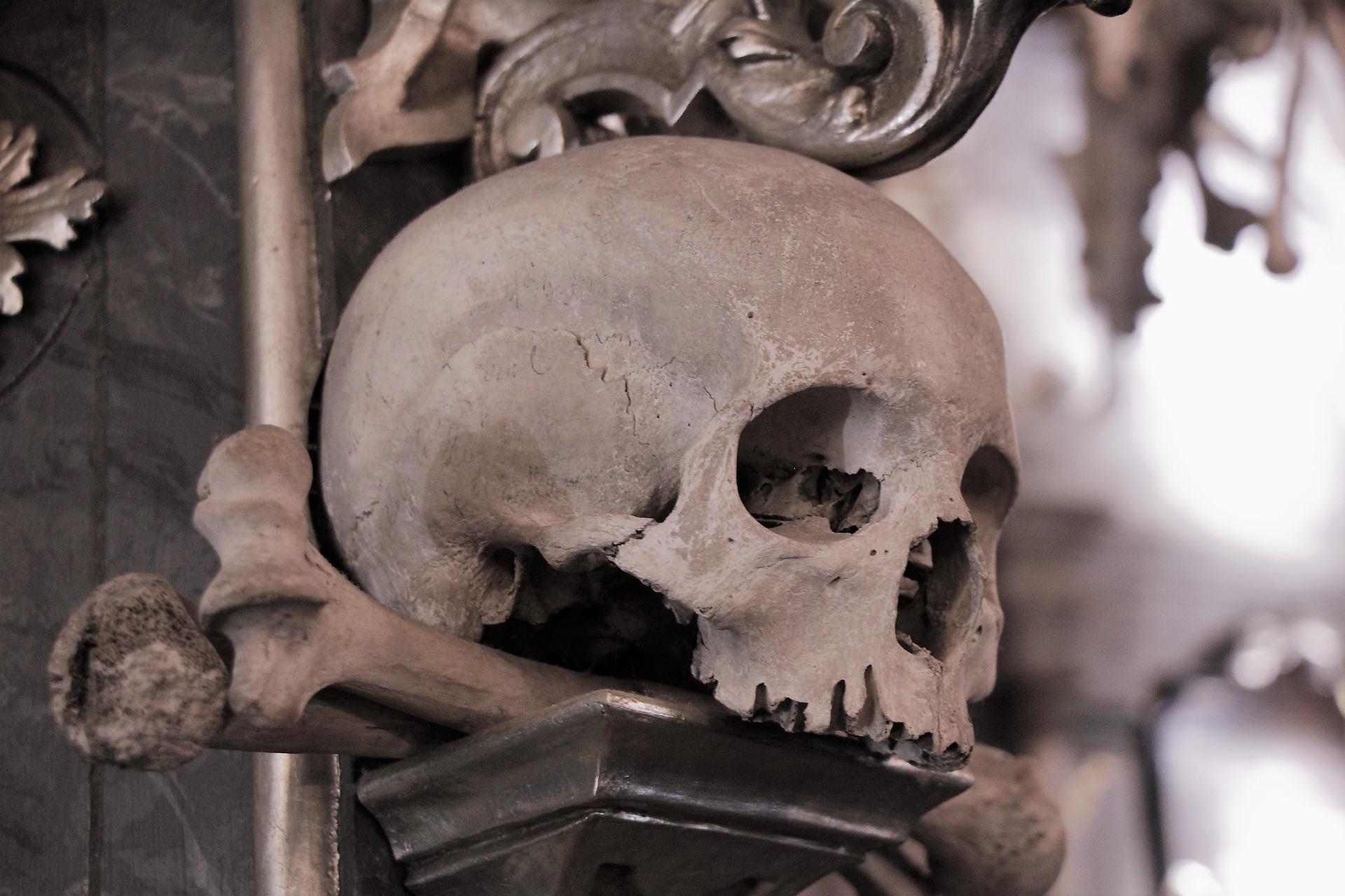 Skull in the Sedlec Ossuary, near Kutna Hora.